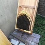 Bienenkiste adé – Umzug ins Magazin