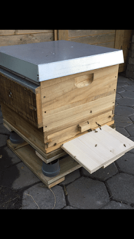 Bienenbeute DNM