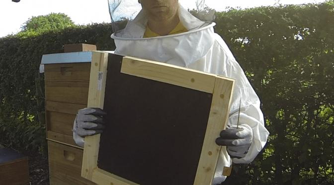Imkerei: Zwischenbodenableger bilden bei Schwarmstimmung
