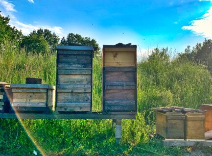 Aggressive Bienen? Was man tun kann…